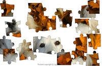 Dog in Leaves  Puzzle
